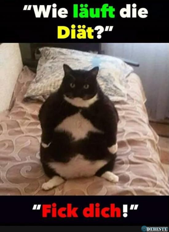 29107ff428d37a82bc29be1e22cde8e2--funny-animal-pictures-funny-animals